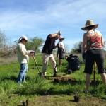 BRECA Parkway Planting - Digging