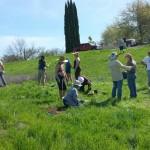 BRECA Parkway Planting - Planting